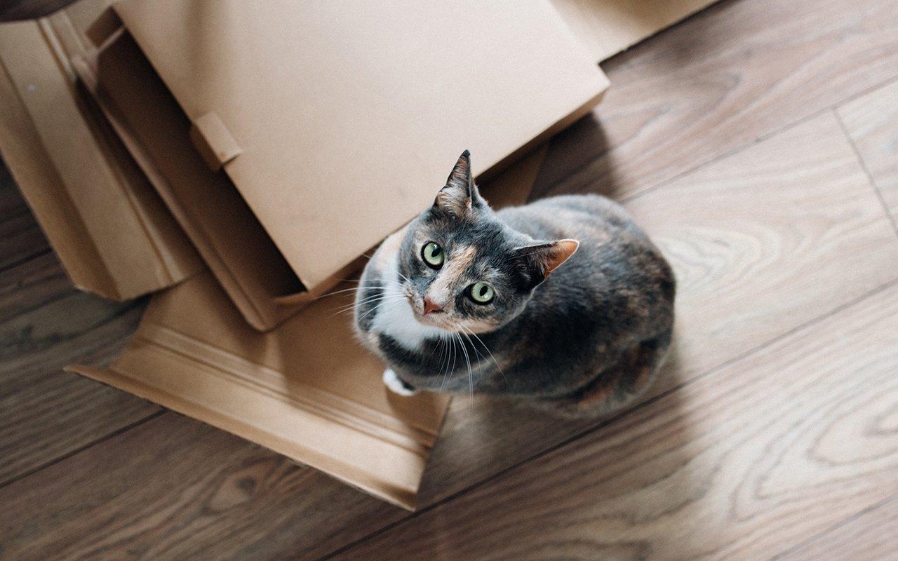 Come traslocare senza stress: vado a vivere da sola!
